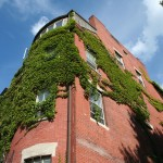Boston Ivy on the Walls - Corner bulding