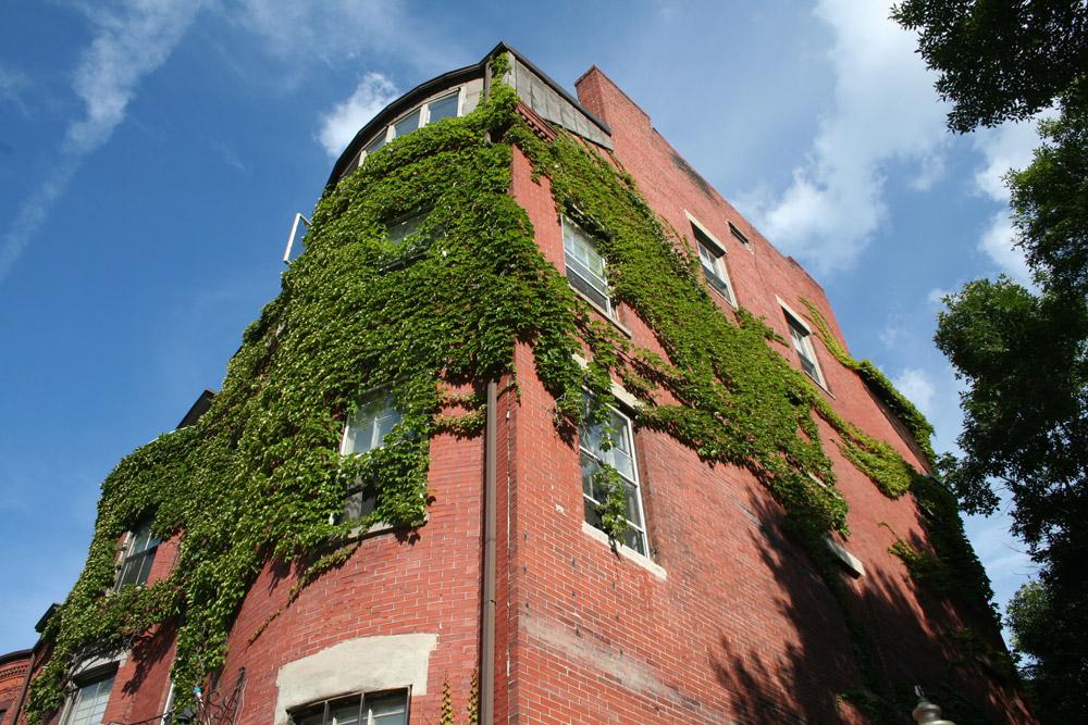 Boston Ivy on the Walls - Corner bulding
