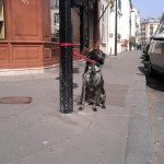 Sad things on the Streets of Paris, Chien accroché abandonné devant magasin