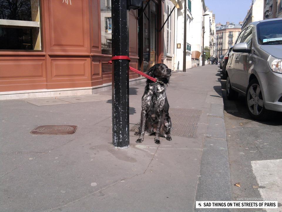 Sad things on the Streets of Paris, Chien accroché abandonné devant magasin
