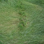 Francois Soulignac - Boston-Harbor - Lovells Island - Grass