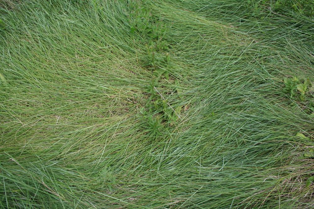 Francois Soulignac - Boston-Harbor - Lovells Island - Grass