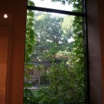 Museum of Fine Arts - MFA Boston - Ivy on the window