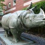 School of the Museum of Fine Arts - Ketherine Lane Weems, Rhinoceros Sculpture