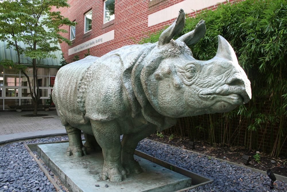 SMFA - Ketherine Lane Weems, Rhinoceros Sculpture
