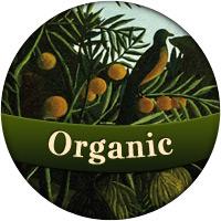 Francois Soulignac - Digital Creative & Art Director - Organic style