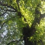 Paris Garden | Feuillages ensoleillés, Trees Sunshine