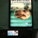 Boston Graphic Design, New England Aquarium adversiting campain cover subway, Is a mischief does
