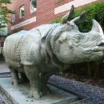 School of the Museum of Fine Arts - Ketherine Lane Weems, Rhinoceros Sculpture